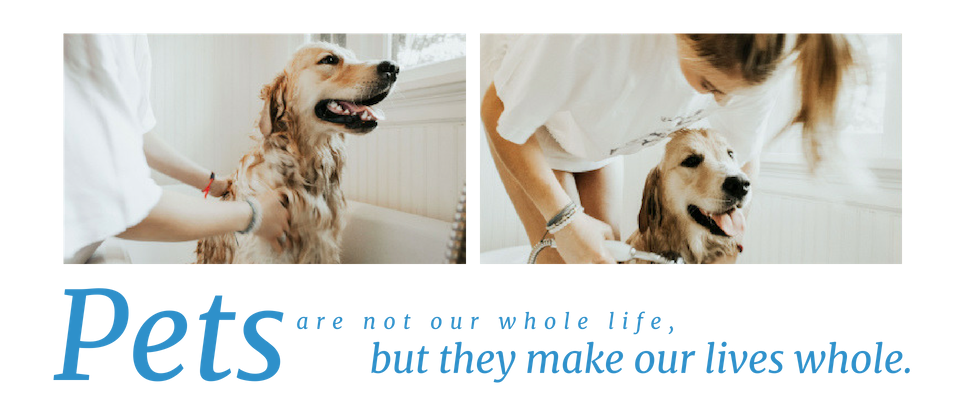 Pets are not our whole life but they make our lives whole.